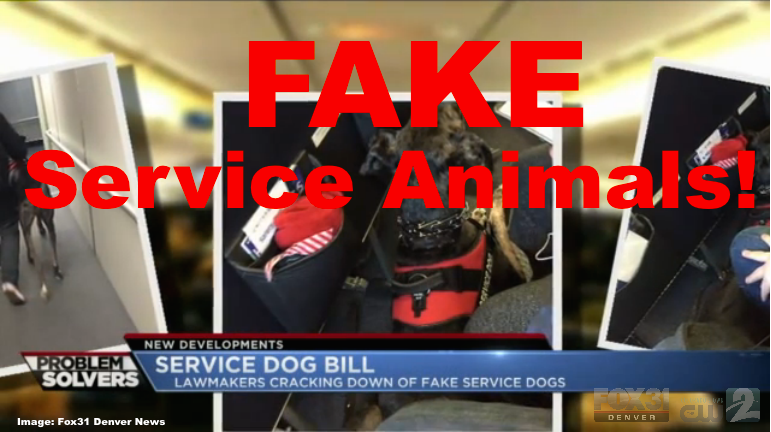 Colorado the first state to make fake service animals a for Can service dogs fly in cabin