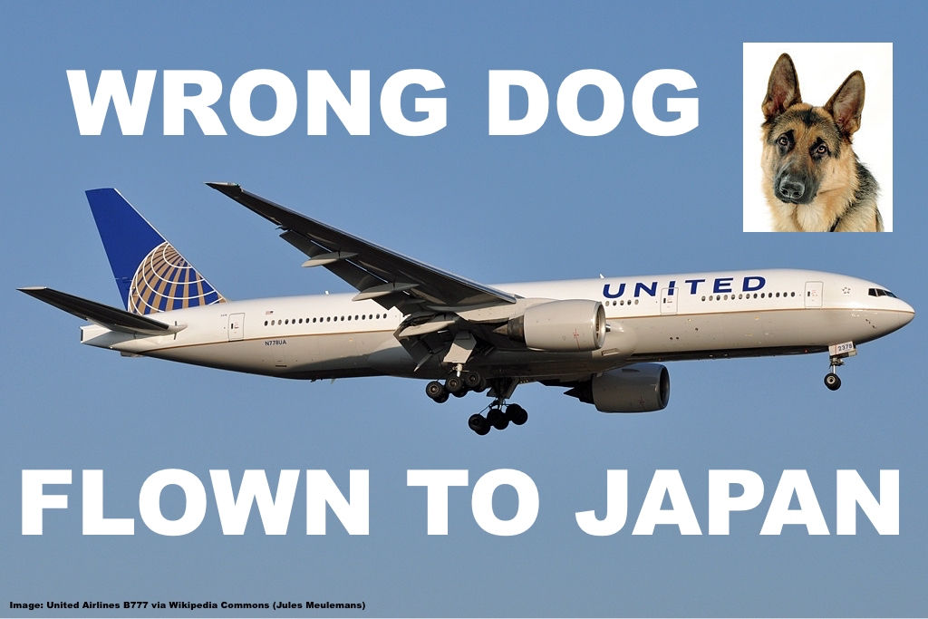 United airlines mistakenly flies dog to japan senator for Best airline to fly dogs