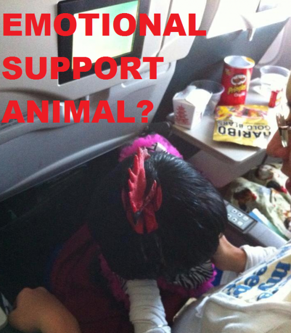 Would You Bring A Rooster As An Emotional Support Animal